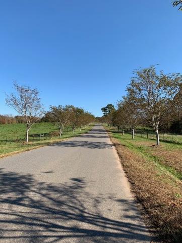 Whitesnake Road